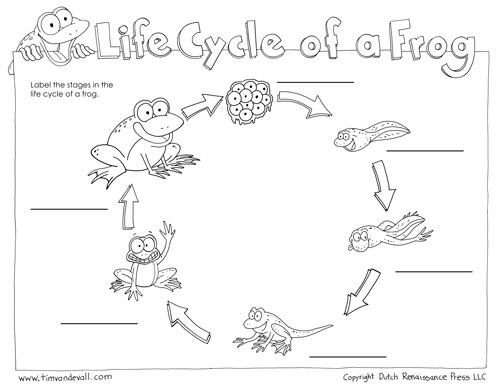 Frog Life Cycle Worksheet – Tim's Printables