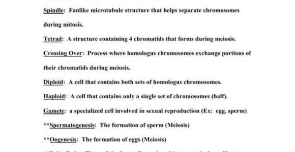 Mitosis And Meiosis Vocabulary Worksheet Answers
