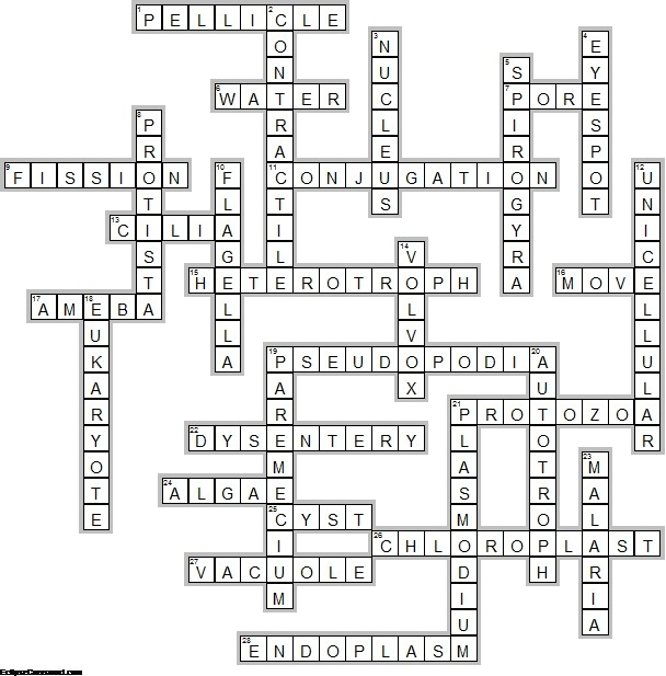 Protist Crossword