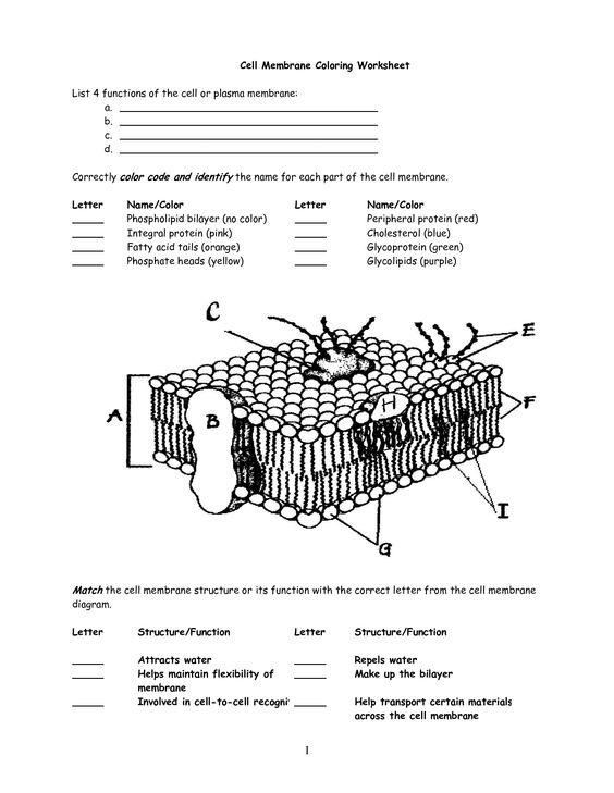 Printables  Cell Membrane Coloring Worksheet  Lemonlilyfestival