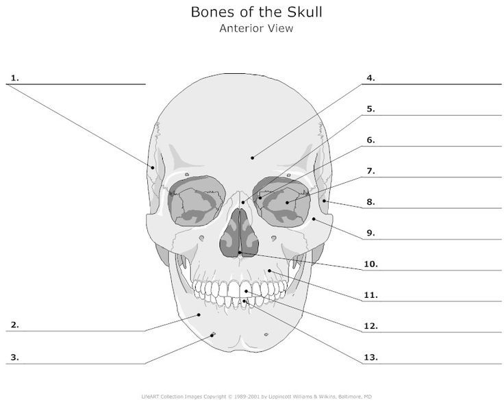 Skull Bones Unlabeled