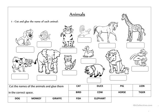 Animals Label And Classify Worksheet
