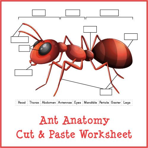 Ant Anatomy Cut & Paste Worksheet