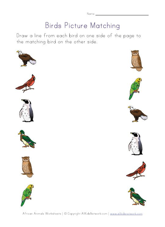 Bird Worksheets For Several Different Skills