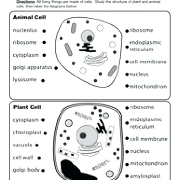 Cell Parts Worksheet Plant Cell Coloring Sheet Combined With