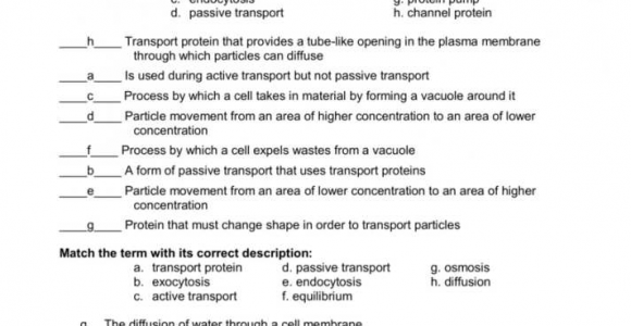 Cell Transport Worksheet Biology Answers