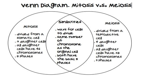 Image Result For Meiosis Worksheet Answer Key