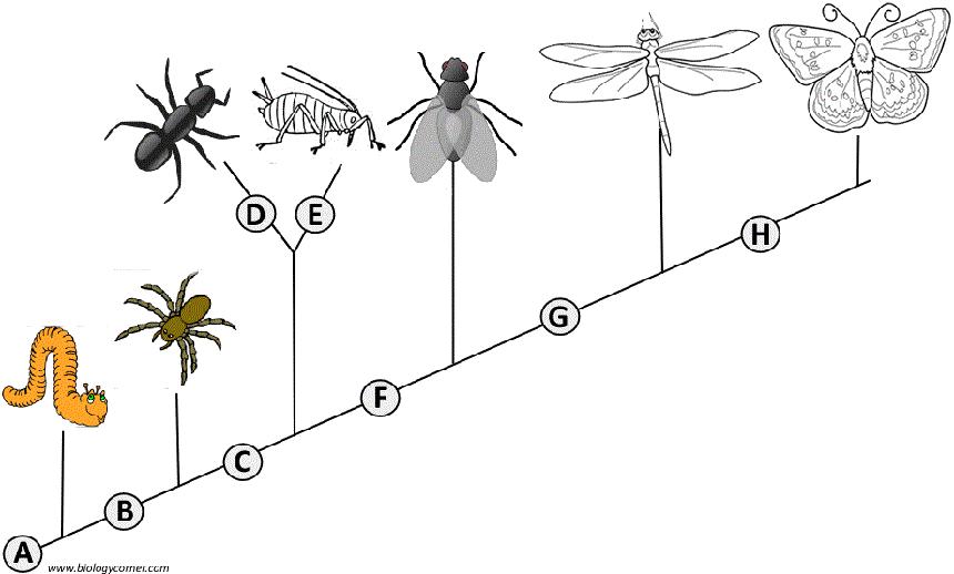 Cladogram Analysis