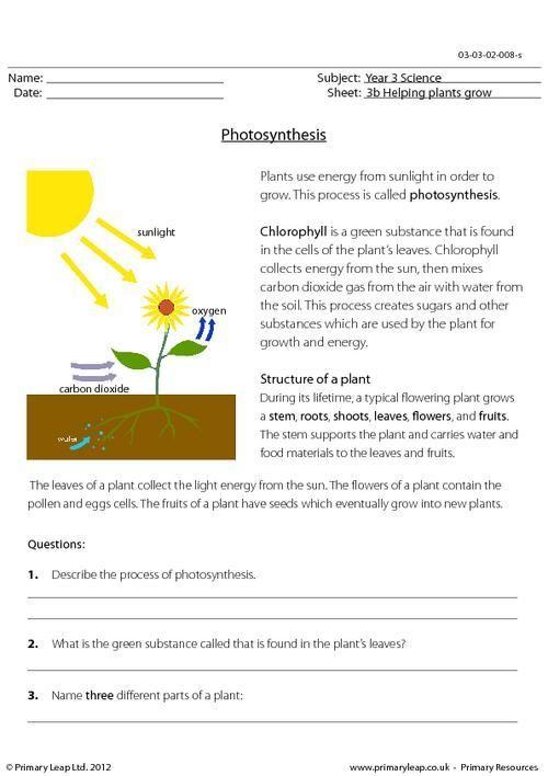 Image Result For 4th Grade Science Plants Worksheets