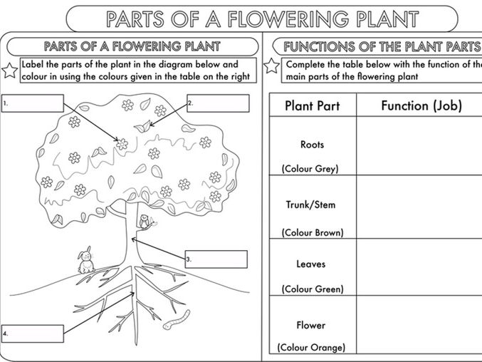 Year 3 Science  Parts Of A Plant Worksheet By Beckystoke