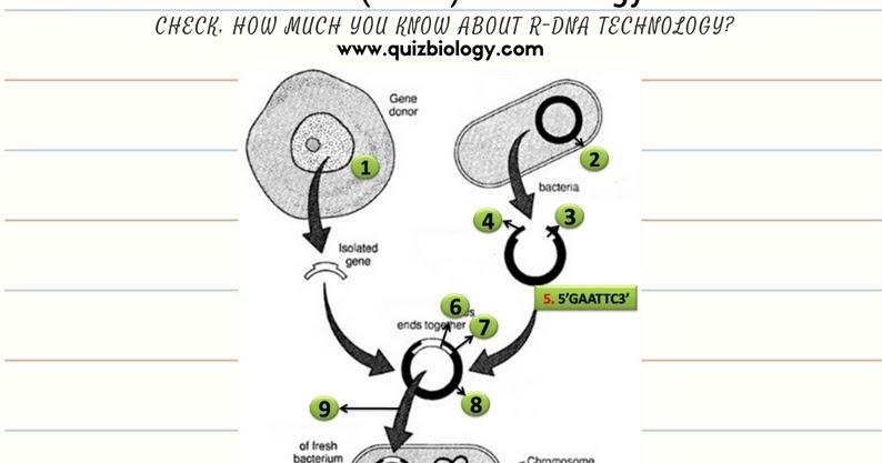Recombinant Dna Technology Worksheet Pdf ~ Biology Exams 4 U