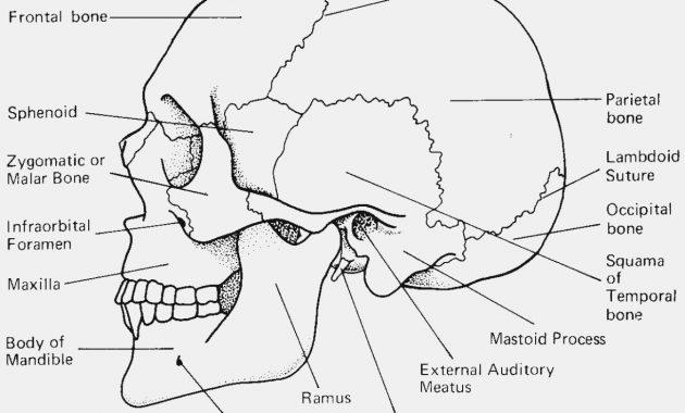 Seven Ways Skull Labeling Worksheet