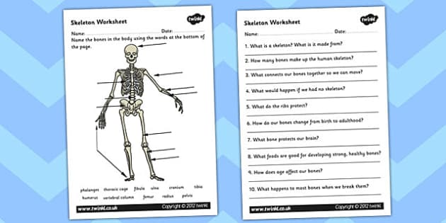Skeleton Worksheet Scientific Names