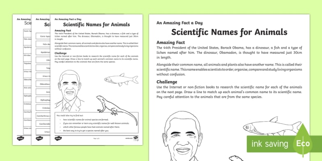 Scientific Names For Animals Worksheet   Worksheet