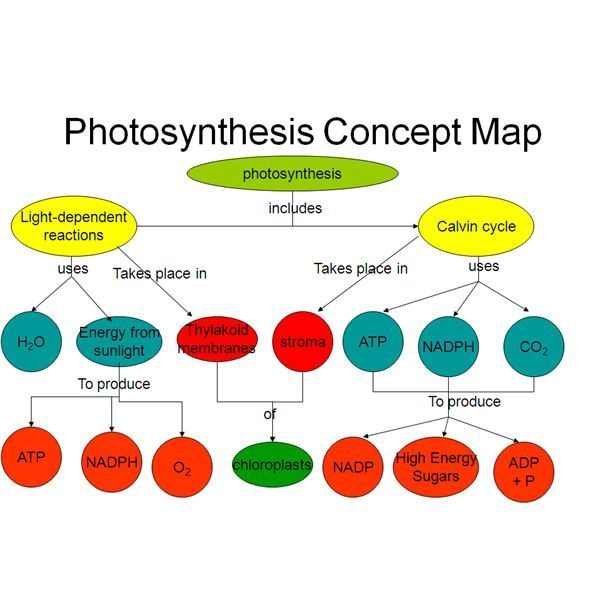 Easy Method For Making A Photosynthesis Concept Map With Example
