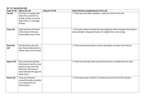 B2 1 3 Task Specialised Cells Worksheet Docx
