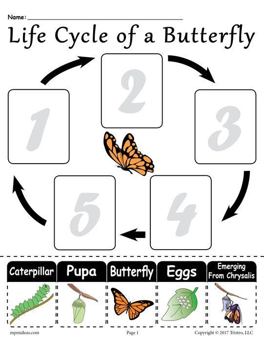 Life Cycle Of A Butterfly  Free Printable Worksheet