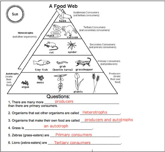 Food Chain Question And Answer Logical Questions