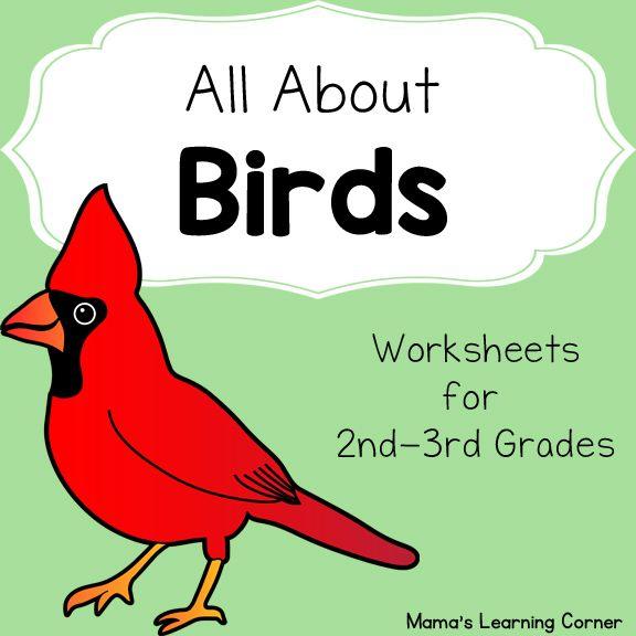 Birds Worksheet Packet For 1st