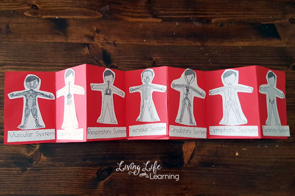 Human Body Systems Worksheets For Kids