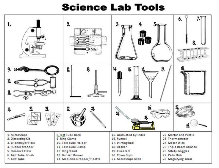 Printables  Biology Lab Equipment Worksheet  Lemonlilyfestival