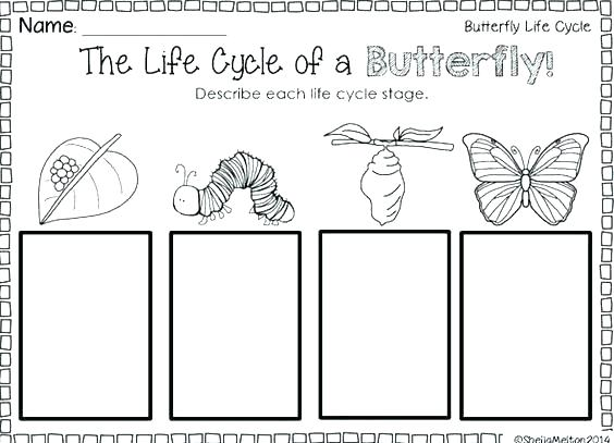 Life Cycle Of A Butterfly Worksheets Butterfly Life Cycle Diagram