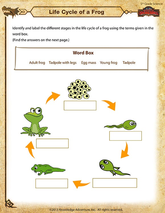 Life Cycle Of A Frog View – Free 5th Grade Science Worksheet