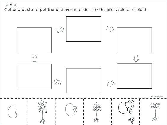 Lovely Life Cycle Worksheet Third Grade – Rpplusplus Me