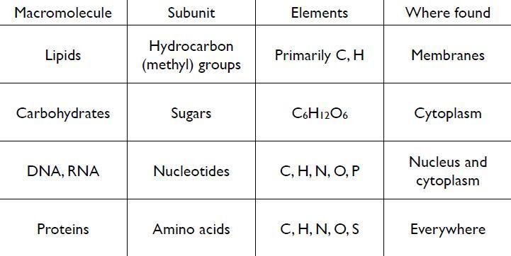 Macromolecule Chart The Image Kid Has It Sand Tray Table