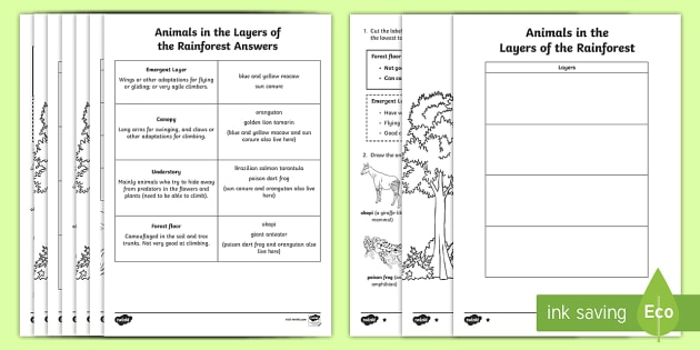 Animals In The Layers Of Amazon Rainforest  Read & Draw Worksheet