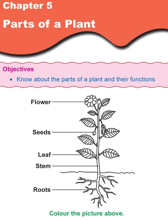 Grade 1 Science Lesson 5 Parts Of A Plant