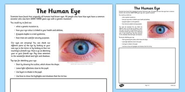Human Eye Drawing Worksheet   Worksheet