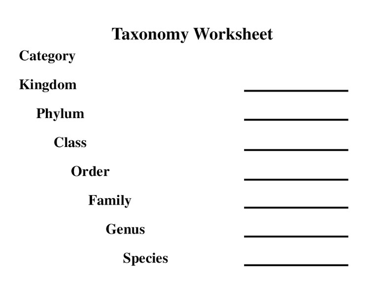 Taxonomy Worksheet First Grade Worksheets Classification Of Matter