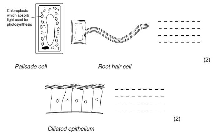 Year 7 Cells Worksheet