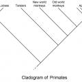 Cladogram Worksheets Middle School