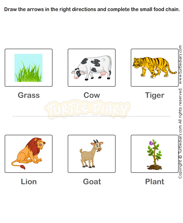 Food Chain Worksheet 15