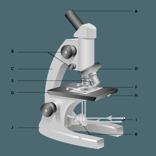 Free Printable Microscope Diagram Worksheet