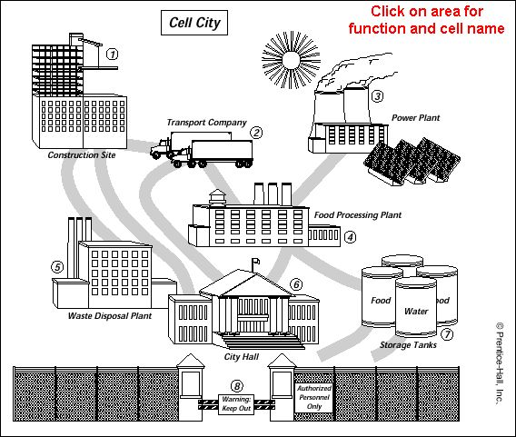 Cell City Diagram Answers