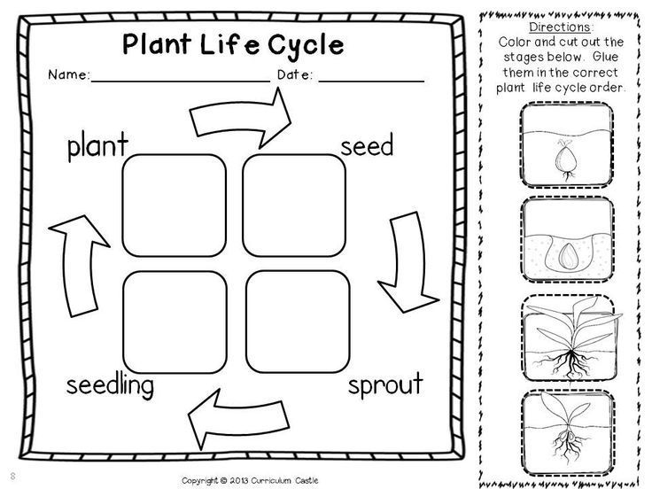 Life Cycle Of A Plant Coloring Page
