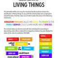 Classification Of Living Things Worksheets 7th Grade