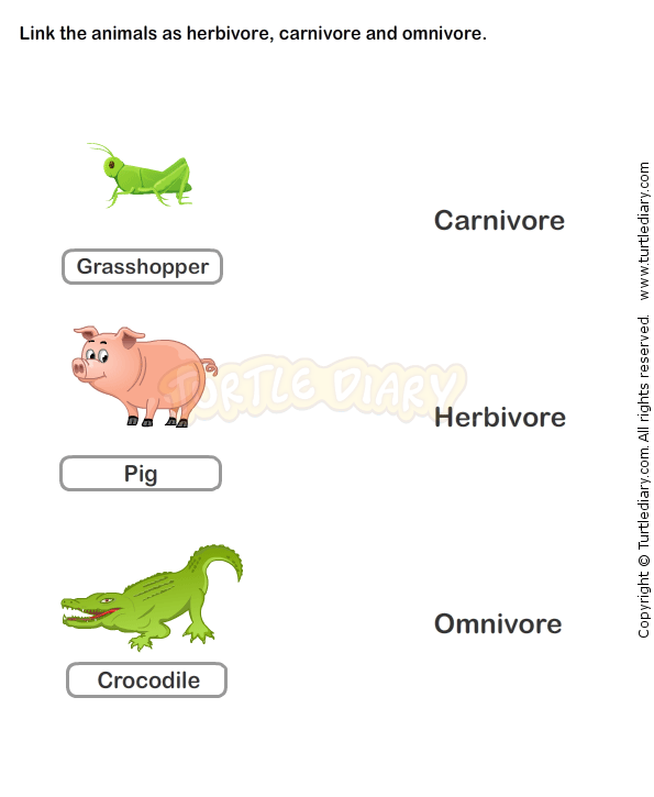 Food Chain Worksheet 6