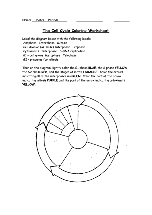 The Cell Cycle Coloring Worksheet Page 2 Of 2 In Pdf