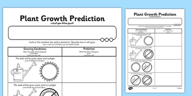Plant Growth Prediction Worksheet Arabic Translation
