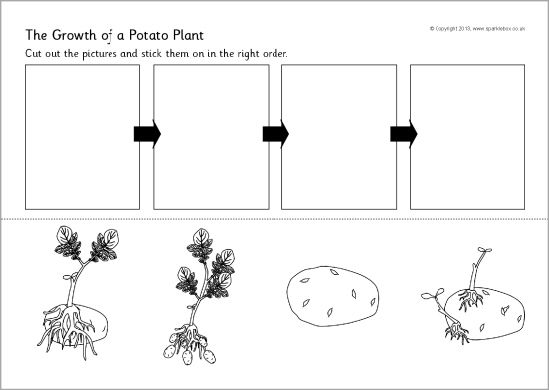 Potato Plant Growth Sequencing Worksheet (sb9782)