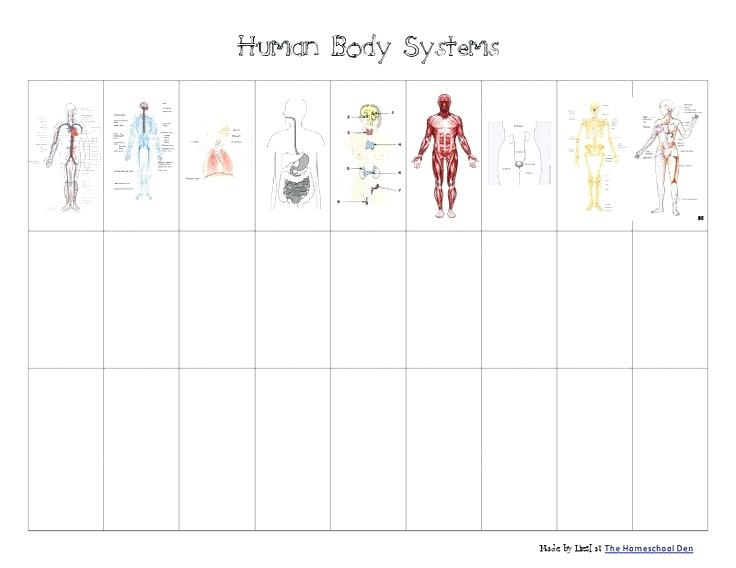 Body Systems Worksheets Middle School Human Body Systems