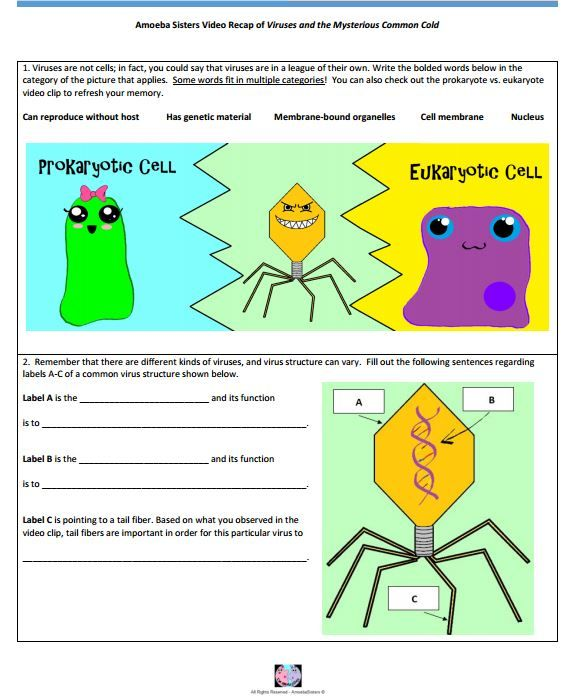 Virus Handout Made By The Amoeba Sisters  Click To Visit Website