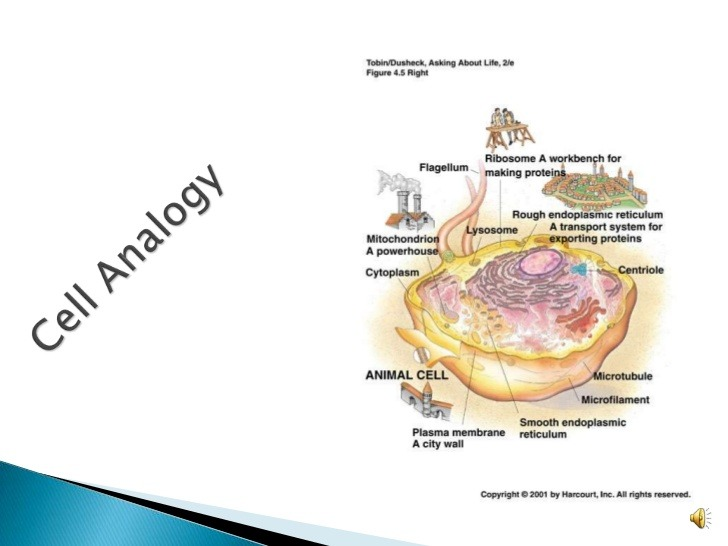 Cell Organelles Analogy