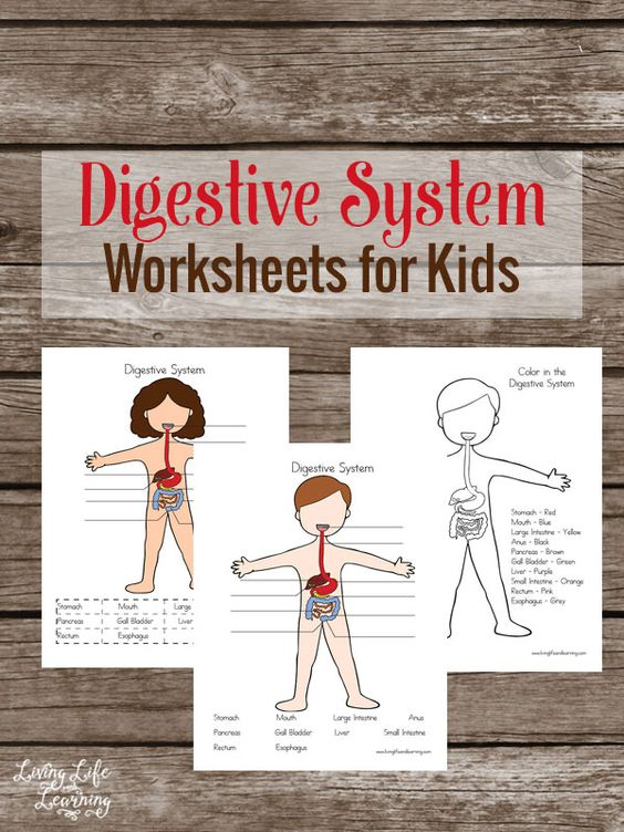 Free Digestive System Worksheets