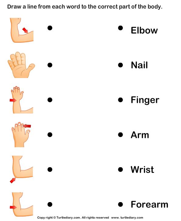 Human Body Parts Name Worksheet