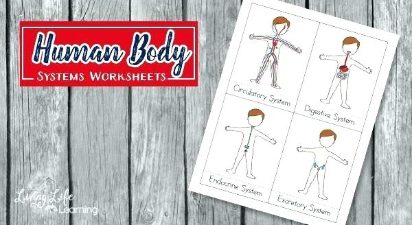 Human Body Systems Worksheets For Kids 1 Worksheet Answers Grade 4